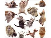 ALLSOP Mouse Pad  Cat Group (Allsop Inc: 29309)